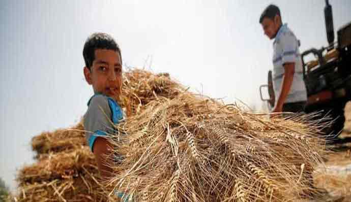 Wheat procurement scandal committee develops report